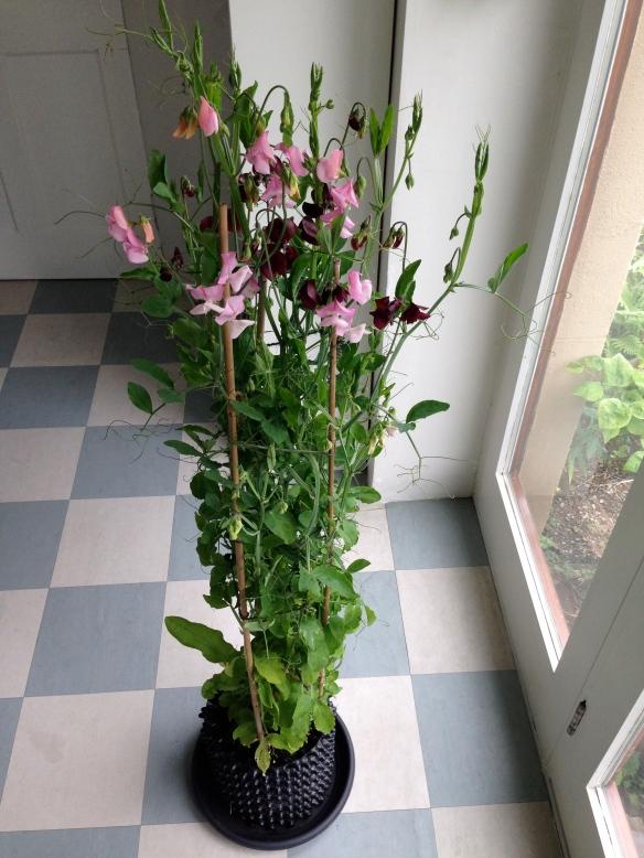 Air Pot Gardener Growing Better Plants With Air Pot