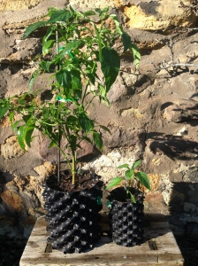 Air-Pot Gardener | Growing better plants with Air-Pot containers